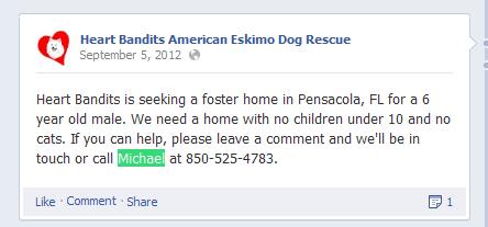 Heart Bandits American Eskimo Dog Rescue 2013-05-05 01-33-00