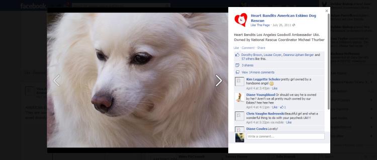 Heart Bandits American Eskimo Dog Rescue 2013-05-05 01-35-06