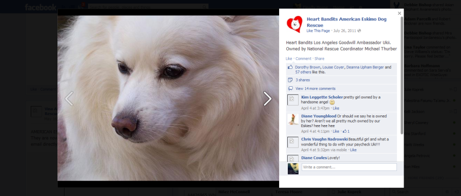 Heart Bandits American Eskimo Dog Rescue 2013-05-05 01-35-06