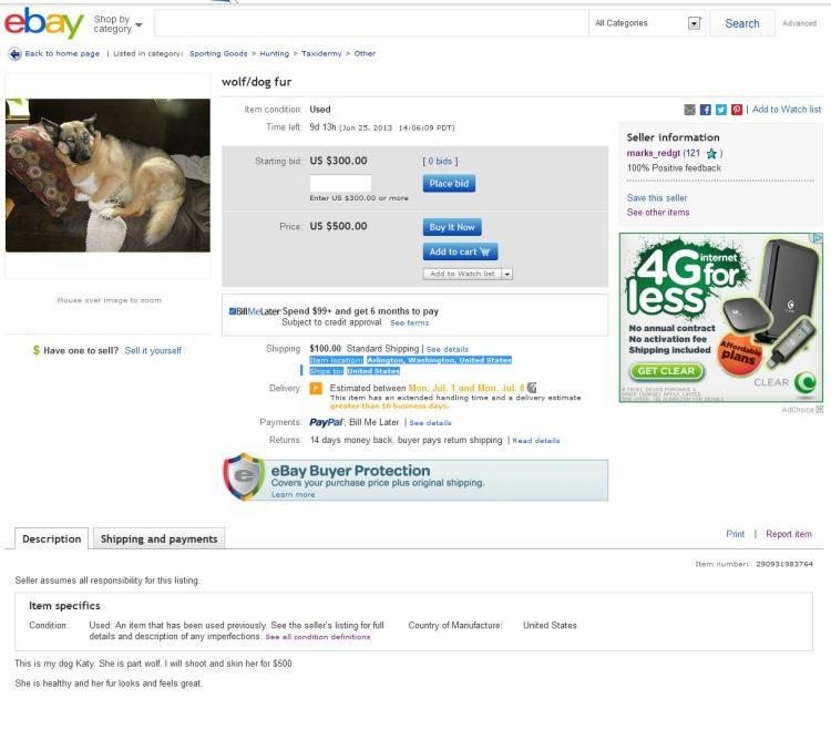Wolf Dog Fur  eBay 2013-06-16 01-06-20